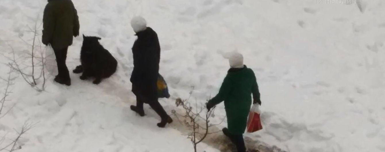 Жестокое убийство собаки в новогоднюю ночь всколыхнуло один из районов Киева