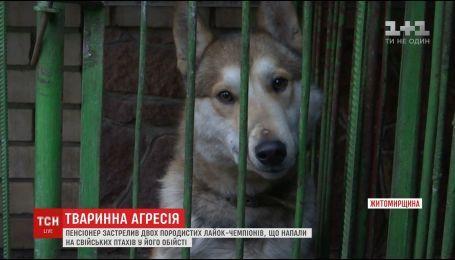 На Житомирщині розгорівся скандал через вбивство собак, що напали на обійстя пенсіонера