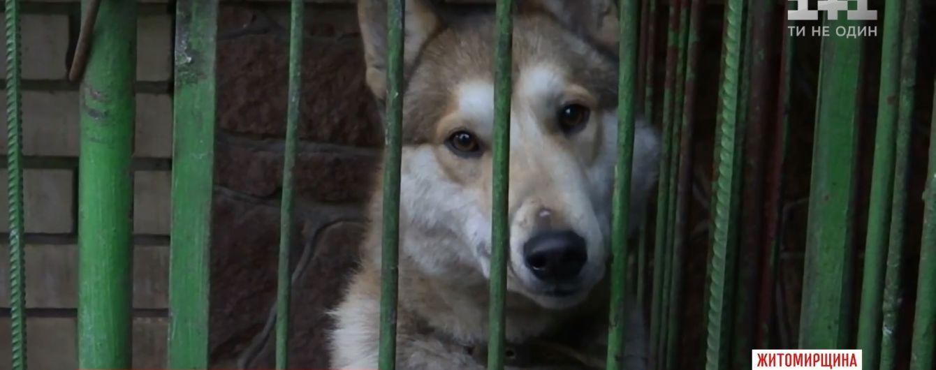Собаки и куры вызвали драку и стрельбу на Житомирщине