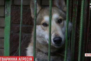 Собаки та кури спричинили бійку та стрілянину на Житомирщині
