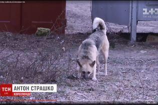 """""""Починає трохи відходити"""": батьки розповіли про стан пошматованої собаками 6-річної дівчинки з Одещини"""