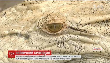 В Австралии туристов развлекает редкий белый крокодил