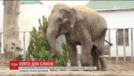 В Харьковском зоопарке вольеры слонов украсили живыми елками