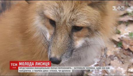На Киевщине разгорелся скандал во время визита мужчины с лисичкой в супермаркет