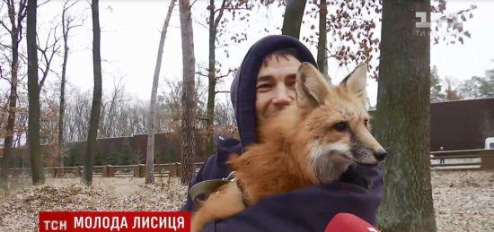Українця оштрафували на 800 грн за появу в супермаркеті з прирученою лисичкою