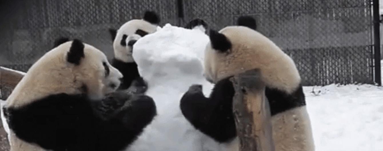 Панда Кунг-Фу. В Канаде семья млекопитающих брутально уничтожила снежную бабу