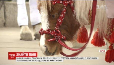 Детективна історія: як у Харкові двічі загубили поні