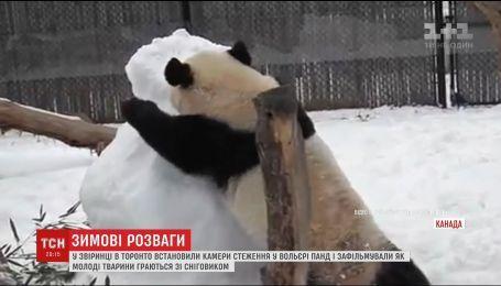 У звіринці Торонто зафільмували як молоді панди граються зі сніговиком