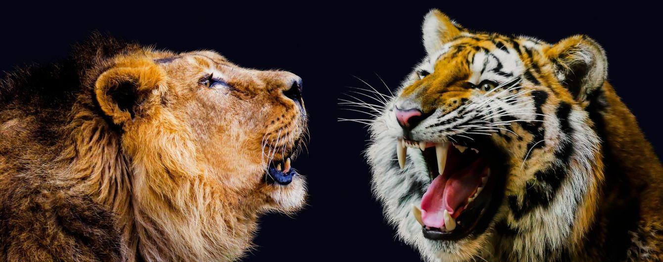 Жуткая репетиция: в китайском цирке львица и тигр напали на коня