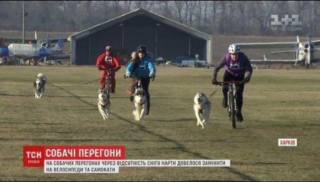 В Харькове прошли собачьи гонки на велосипеде