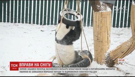 В Китае пандочки устроили милые игры со снегом