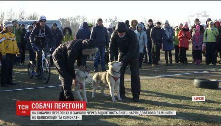 На собачих перегонах у Харкові через відсутність снігу нарти замінили на велосипеди