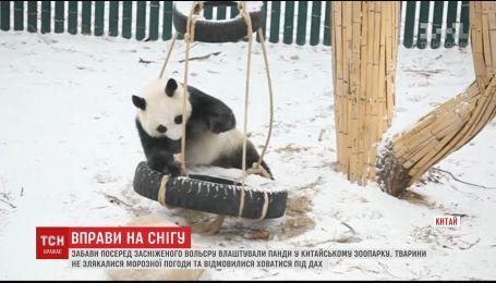 В китайском зоопарке панды устроили забавы среди заснеженного вольера