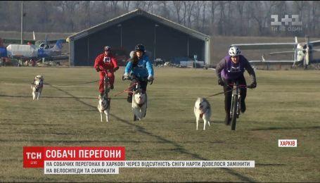 Из-за нехватки снега в Харькове собак вместо саней впрягли в велосипеды