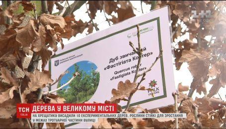Киевляне смогут выбрать деревья, которые высадят на столичном Крещатике
