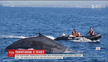 Американские спасатели освободили из сетей горбатого кита