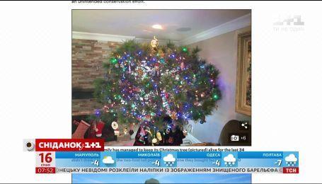 Калифорнийская семья более 30 лет украшает одну и ту же елку