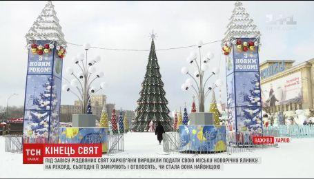 Харьковская елка может попасть в книгу рекордов Украины