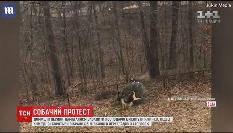 В Сети набирает популярность видео о борьбе собак за елку
