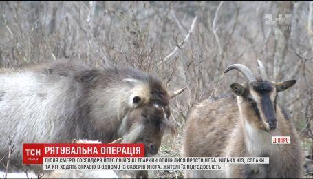В Днепре люди устроили целую операцию, чтобы отловить диких коз