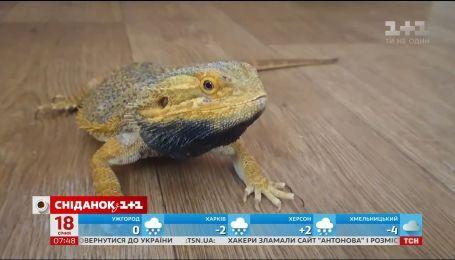 Екзотичні та напрочуд комунікабельні: історія двох харківських ящірок