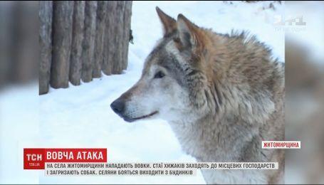 На Житомирщине селяне страдают от стай волков