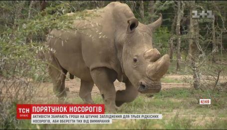 Мир собирает деньги на процедуру искусственного оплодотворения для редкого носорога