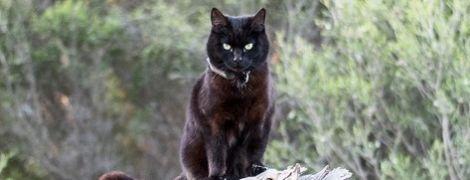 Австралиец бросил хорошую работу и дом и отправился путешествовать с кошкой