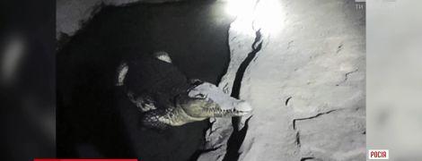 В России следователи во время обыска в подозрительном подвале вместо оружия наткнулись на крокодила