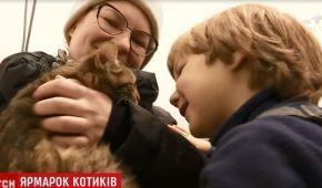 У Києві відбувся ярмарок безкоштовних котів
