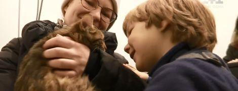В Киеве состоялась ярмарка бесплатных котов