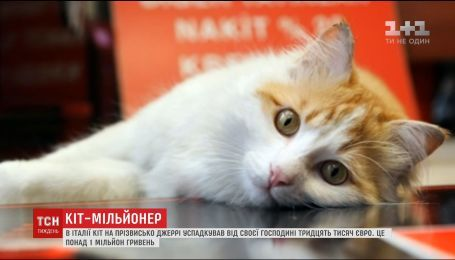 В Италии кот унаследовал от своей хозяйки 30 тысяч евро