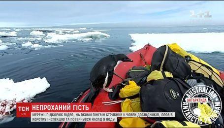 Інтернет підкорює відео, на якому пінгвін стрибнув у човен дослідників
