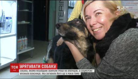 Пса, якому небайдужі збирали гроші на операцію, у соцмережі знайшла його справжня власниця
