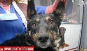 Киянка знайшла свого собаку після п'ятьох років розлуки