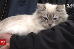 """В аеропорту """"Київ"""" під час реєстрації жінка покинула кішку, на яку не мала дозвільних документів"""