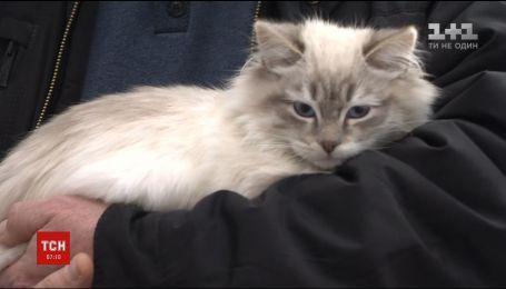 """В аэропорту """"Киев"""" при регистрации женщина покинула кошку, на которую не имела разрешительных документов"""