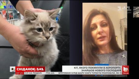 """Прес-секретар аеропорту """"Київ"""" розказала, як вдалося знайти господарів для покинутої кішечки"""