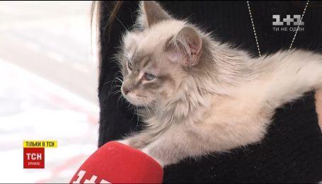 Пассажирка столичного аэропорта покинула кошку у стойки регистрации