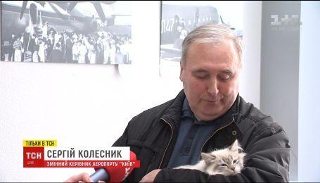 Брошенной в аэропорту кошке нашли нового владельца в соцсети за 10 минут