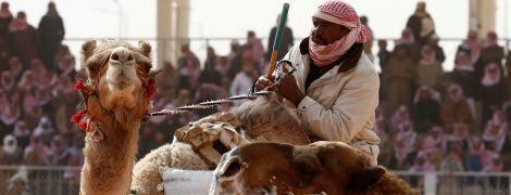 У Саудівській Аравії на верблюжому конкурсі краси учасників дискваліфікували за ін'єкції ботоксу