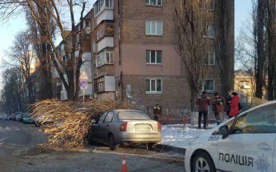 У Києві на припарковані авто впало дерево
