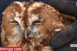 Рідкісна сова прилетіла за порятунком до селян на Кіровоградщині