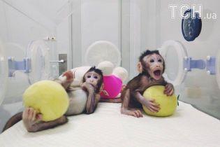 У Китаї вперше в світі клонували мавп. Людина може бути наступною