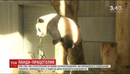 В зоопарке Китая увеличат часы посещения панды, которая росла далеко от публики полгода