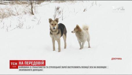 Боевики используют собак и кошек для отвлечения внимания украинских бойцов