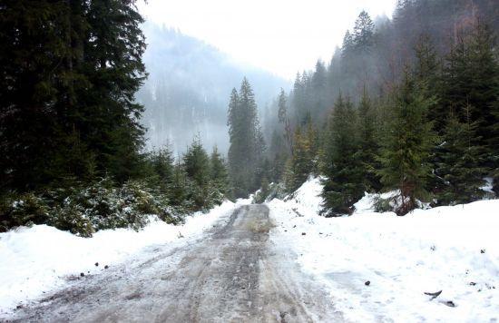 Синоптики обіцяють ще кілька днів відлиги з дощами та туманом, а потім - похолодання
