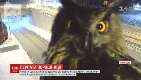 Финская сова уселась перед камерой наблюдения, мешая полиции отслеживать нарушения автомобилистов
