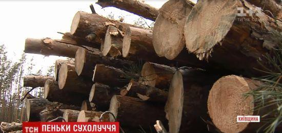 У Сухолуччі масово вирубують ліс навколо мисливських угідь Януковича