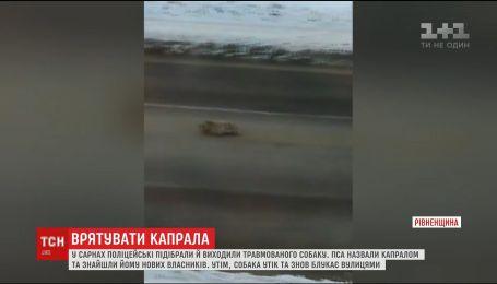 На Ровенщине копы спасли травмированного пса, которого сбила машина